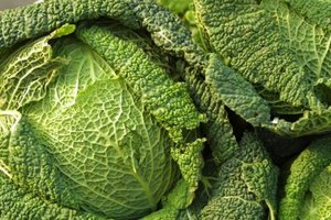 Leafy cabbage is typically bright green.