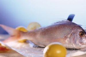 Snapper is an ocean fish, and the red snapper is prized for good eating.