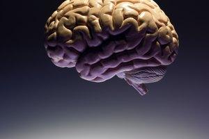 Schools That Offer Cognitive Neuropsychology Majors