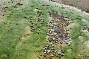 Enfermedades causadas por las algas verdes azuladas