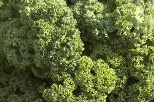 Green kale is a standard in supermarkets.