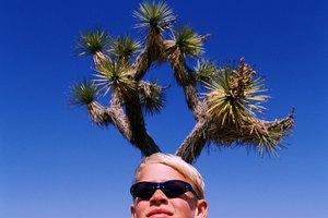 ¿Pueden los humanos beber agua de un cactus?