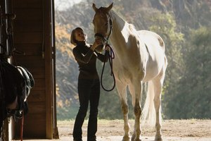 Colleges With Equine Business Majors