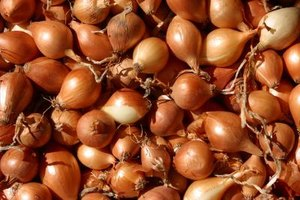 The time it takes to cook onions in the oven depends on how well-done you want them.
