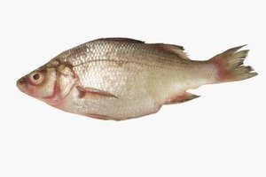 Brining works wonders on tilapia, a naturally lean and neutrally flavored fish.