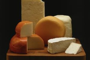 Cheese curds are shaped and aged into various cheese types.