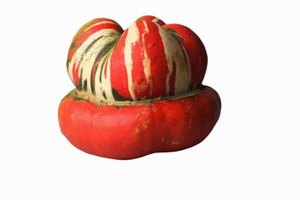 Look for turban squash during the late summer and through the fall.