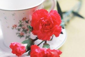 ¿Es seguro consumir té Lipton durante el embarazo?