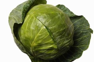 Select fresh, firm cabbage heads for freezing and cooking.