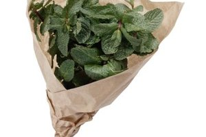 Choose mint leaves with bright green stems and crisp leaves.