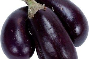 Characteristics of Eggplant