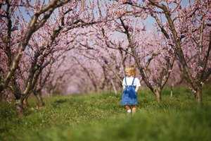 Tu B'Shevat Activities for Toddlers