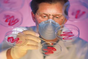 Colleges & Universities That Offer a Master's Degree in Biological Sciences