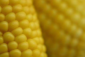 ¿Hace engordar el maíz?