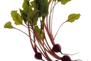Beet greens and stems are high in iron, vitamin A, vitamin C and calcium.