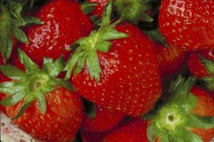 Strawberries are one of America's most beloved fruits.