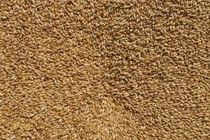 Wheat berries can be frozen for safe long-term home storage.