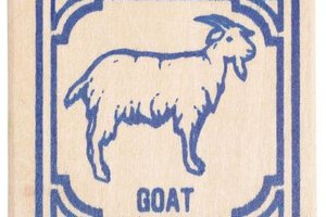 Any recipe for lamb is suitable for goat meat.