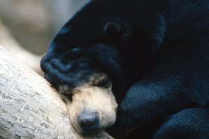 Lesson Plans on Bears for Activities on Science for Preschoolers