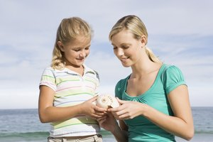 Activities to Teach Students About Seashells