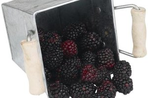 Preserve blackberry juice concentrate in 1-ounce frozen portions.
