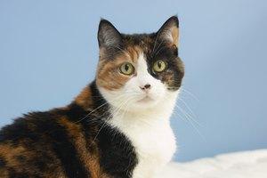 ¿Cómo deshacerse de la electricidad estática en el pelo de un gato?