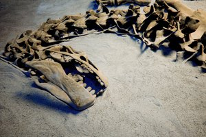 In Which States Are Dinosaur Fossils Found?