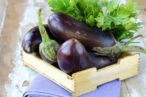 Various Types of Eggplant