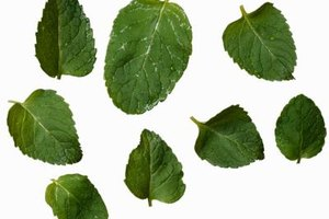 Bundle like-sized mint leaves for more efficient and easier slicing.