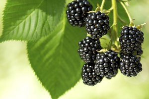 How to Make Wild Blackberry Jam for Canning