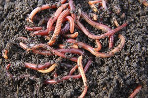 How to Sell Vermicompost