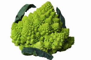 Romanesco must be blanched before freezing, just like broccoli and cauliflower.