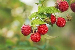 How to Clean Raspberries