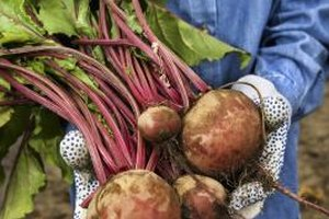Use fresh, large turnips for more pungent fries.