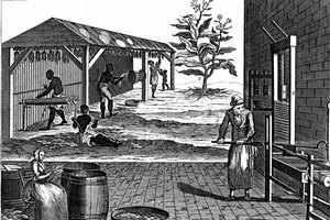 What Brought About the Creation of Slavery in the Colonies?
