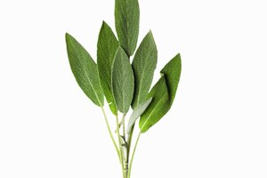 How Long Should One Keep Sage Tea on Grey Hair?