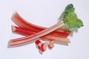 How to Extract Oxalic Acid from Rhubarb Leaves