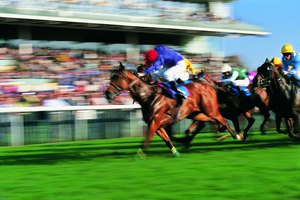 Ethical Issues in Horse Racing