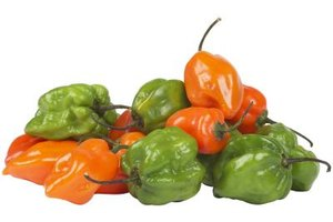 Habanero peppers have a wrinkly, bulbous shape and come in many colors.