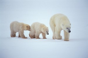 Activities Regarding the Arctic Zone for Preschoolers