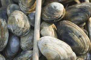 What Is the Black Stuff in Clams?