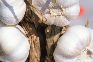 Relación entre el ajo y la gastritis
