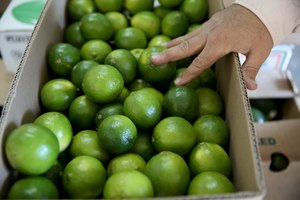 About Wholesale Mexican Imports