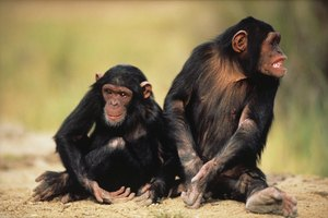 PhD Programs in Animal Behavior