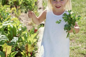 Preschool Lesson Plan on Seeds & Plants