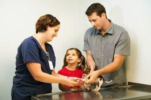 Veterinary Activities for Preschoolers