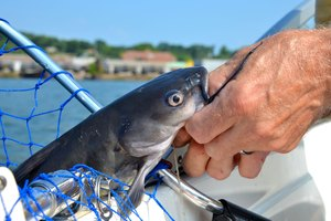 Where to Go Fishing for Catfish in Minnesota