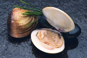 Cooking Substitution for Clam Juice
