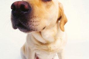 Maneras naturales de inducir el parto en una perra