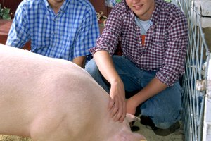 What Skills Do You Need to Become an Animal Science Teacher?